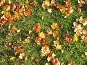 autumn-leaves.jpg