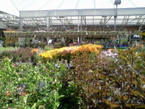 flowers @ Lowes