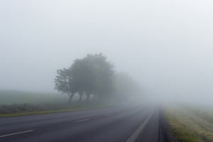 foggy road - trees