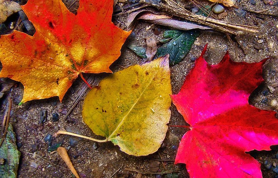 leaves-falling-autumn