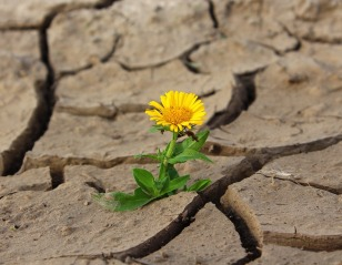 flower in cement