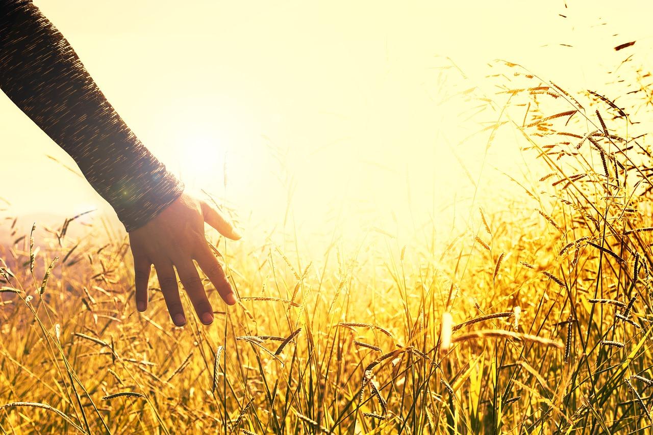 touch grass - sunset