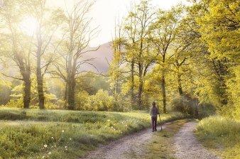 path-1577192_640