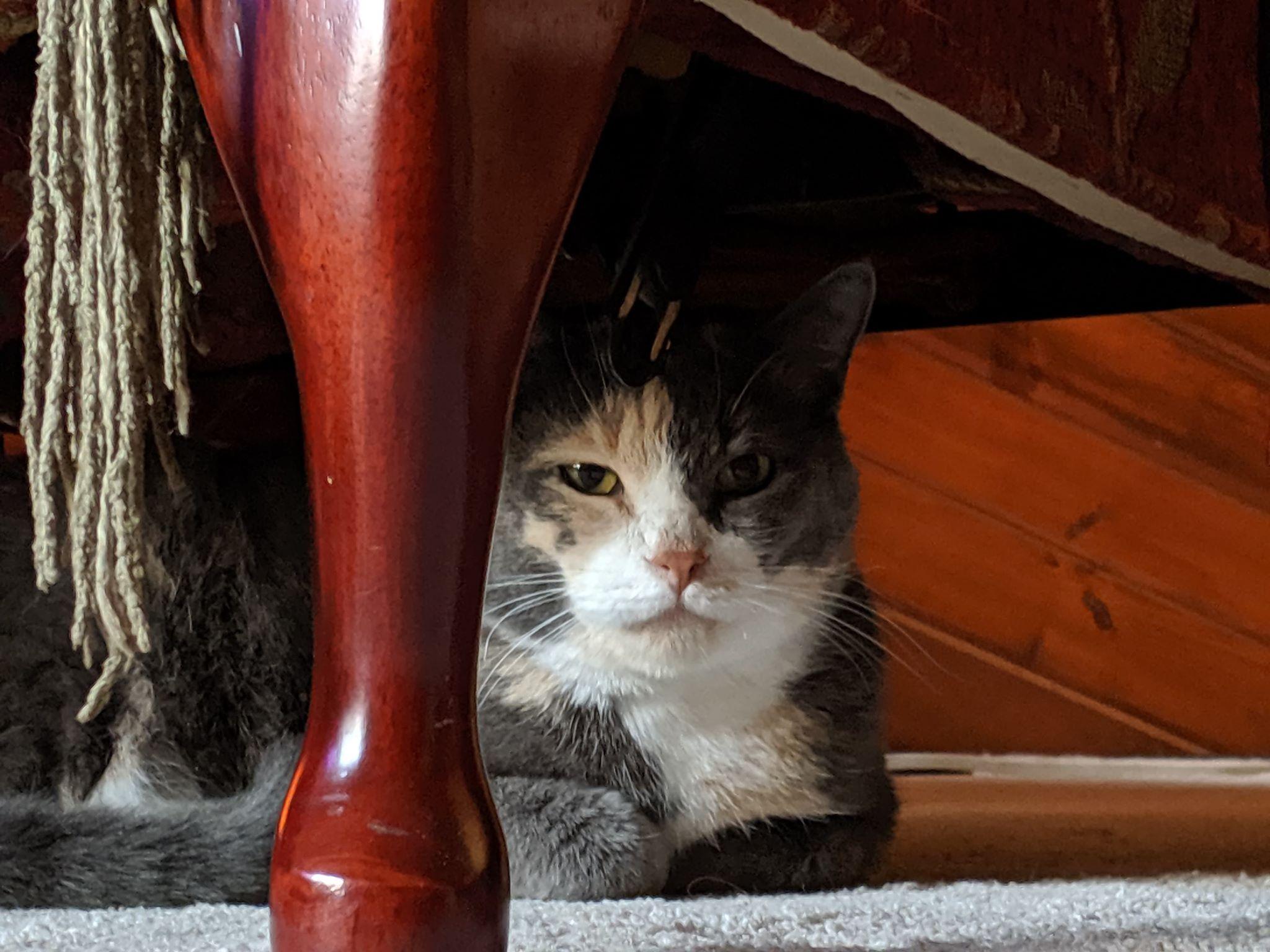 Peppernut under chair